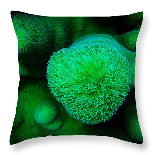 Scuba Diving Throw Pillow featuring the photograph Green Coral by Arley Atkins