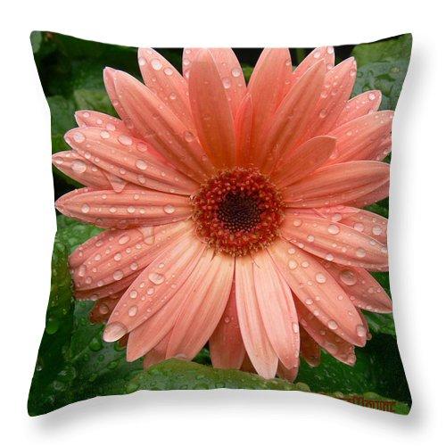 Erica Maxine Throw Pillow featuring the photograph 04-19-09 Gerbera Daisy by Ericamaxine Price
