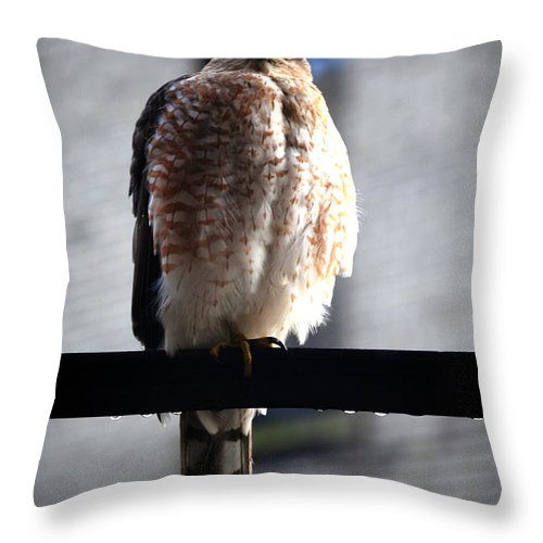 Throw Pillow featuring the photograph 05 Falcon by Michael Frank Jr