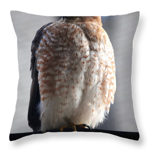 Throw Pillow featuring the photograph 06 Falcon by Michael Frank Jr