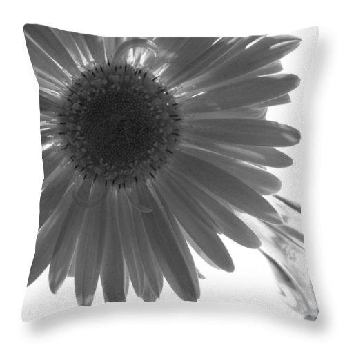 Gerber Photographs Throw Pillow featuring the photograph 0684a4 by Kimberlie Gerner