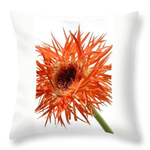 Gerbera Photographs Throw Pillow featuring the photograph 0688c-011 by Kimberlie Gerner