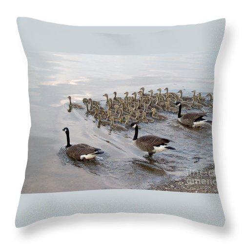 Ducks Ducklings Water Lake Breeding Throw Pillow featuring the photograph 1 2 3 Go by Vilas Malankar