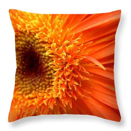 Gerber Throw Pillow featuring the photograph 6137 by Kimberlie Gerner