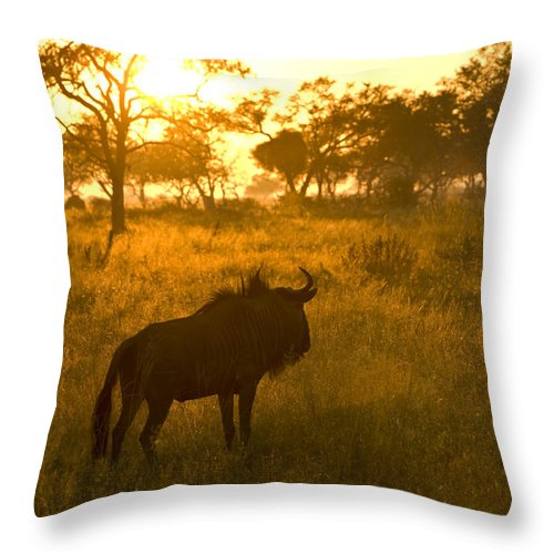 Adult Animal Throw Pillow featuring the photograph A Backlit Wildebeest Resting by Roy Toft
