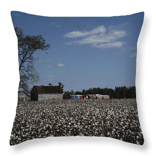 Farmers And Farming Throw Pillow featuring the photograph A Cotton Field Surrounds A Small Farm by Medford Taylor
