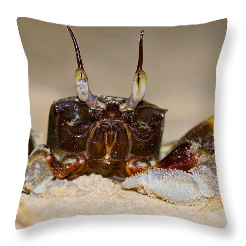 Animal Throw Pillow featuring the photograph A Crab On The Shore by U Schade
