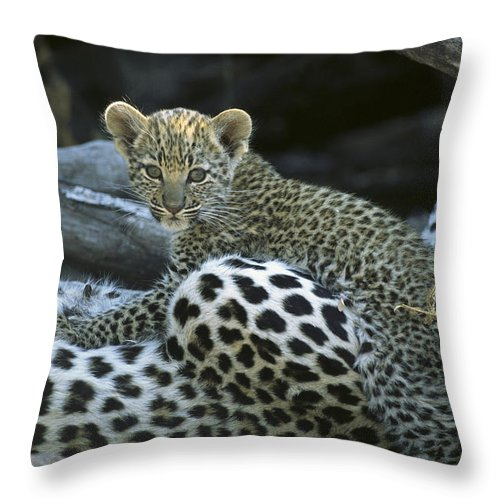 Africa Throw Pillow featuring the photograph A Leopard Cub, Panthera Pardus by Beverly Joubert