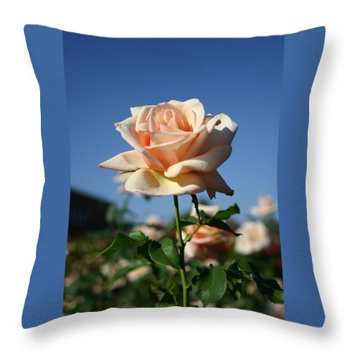Rose Throw Pillow featuring the photograph A Texas Rose by Nina Fosdick