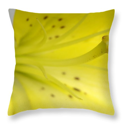 Photography Throw Pillow featuring the photograph A Yellow Lily Lilium Canadense by Joel Sartore
