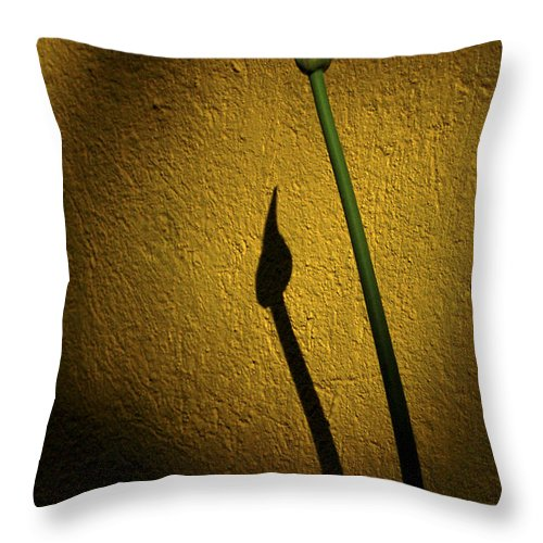 Flowers Throw Pillow featuring the photograph Agapanthus by David Resnikoff