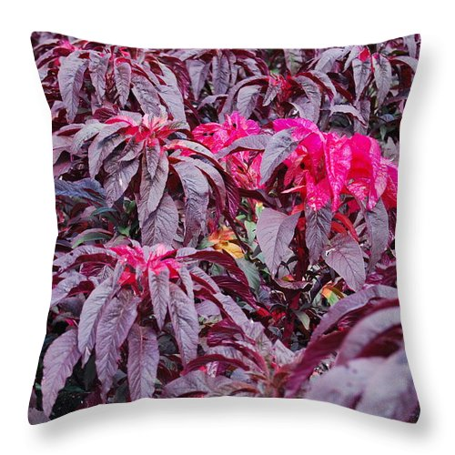 Plants Throw Pillow featuring the photograph All Together Now by Michael L Gentile