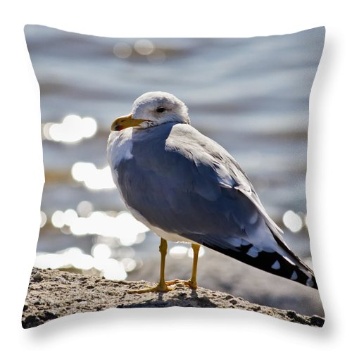 California Throw Pillow featuring the photograph Alone At Last by Linda Dunn