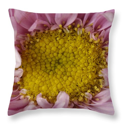 Photography Throw Pillow featuring the photograph An Aster Flower Aster Ericoides by Joel Sartore