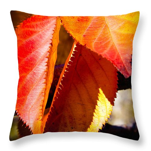 Leaves Throw Pillow featuring the photograph Autumn Leaves by David Patterson
