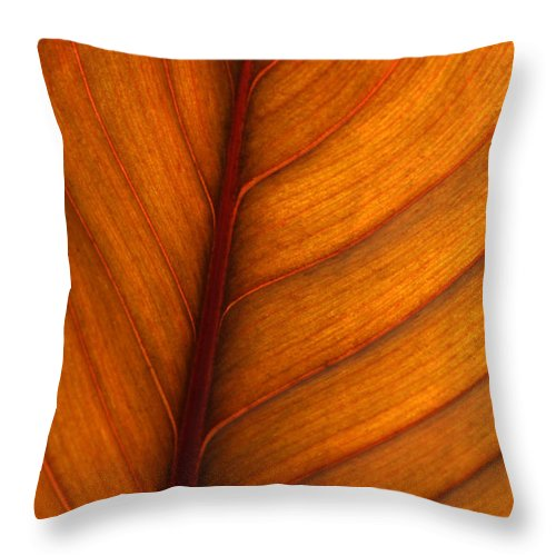 Leaf Throw Pillow featuring the photograph Backlit Leaf by Sabrina L Ryan