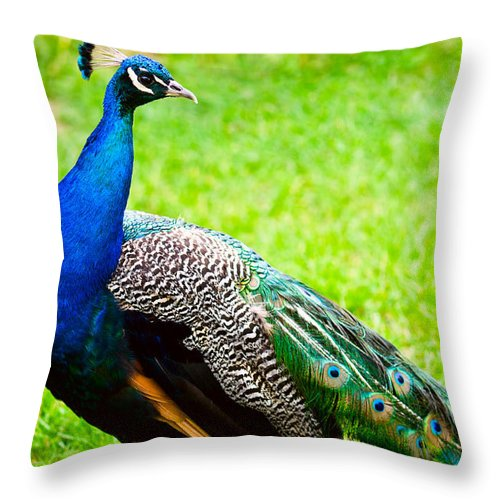Adult Throw Pillow featuring the photograph Beautiful And Pride Peacock On A Lawn by U Schade