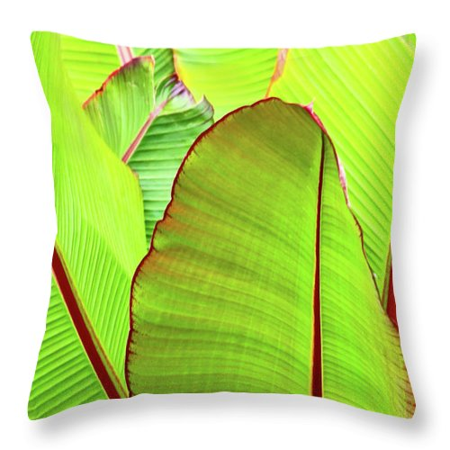 Tropical Plants Throw Pillow featuring the photograph Bird Of Paradise by Ann Murphy