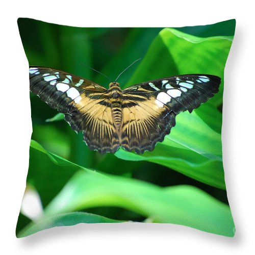 Butterfly Butterflies Throw Pillow featuring the photograph Broken by Diego Re