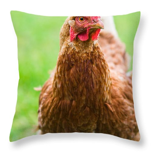 Animal Throw Pillow featuring the photograph Brown Hen On A Lawn by U Schade
