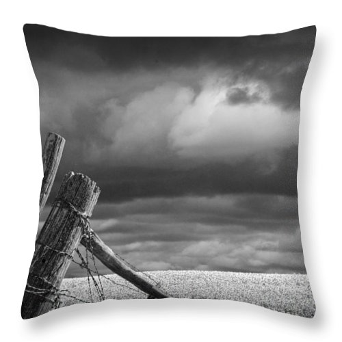 Art Throw Pillow featuring the photograph Canola Field In Southern Alberta by Randall Nyhof