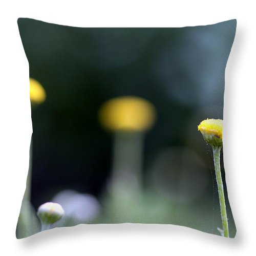 Plant Throw Pillow featuring the photograph Chamomile by Henrik Lehnerer