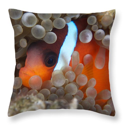 Amphiprion Melanopus Throw Pillow featuring the photograph Cinnamon Clownfish In Its Host Anemone by Terry Moore