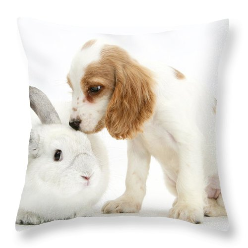 Nature Throw Pillow featuring the photograph Cocker Spaniel And Rabbit by Mark Taylor