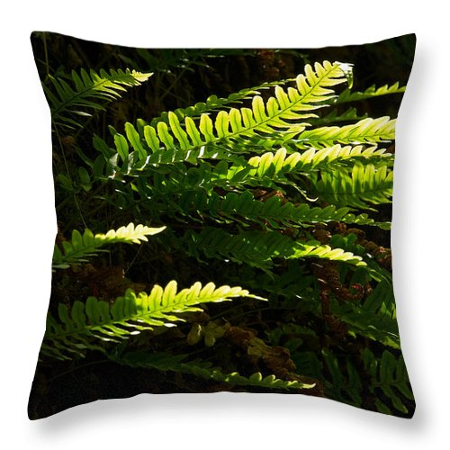 Helvetinjarvi National Park Throw Pillow featuring the photograph Common Polypody by Jouko Lehto