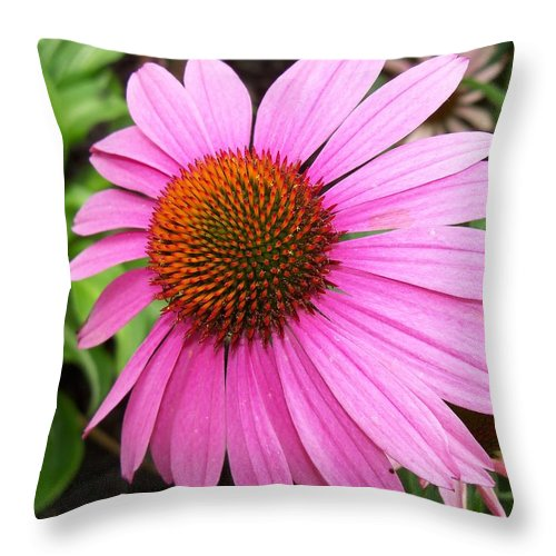 Flower Throw Pillow featuring the photograph Cone Flower by Corinne Elizabeth Cowherd
