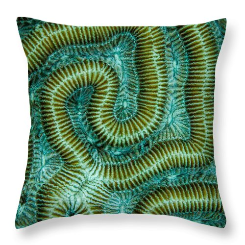 Brain Coral Throw Pillow featuring the photograph Coral Design by Jean Noren