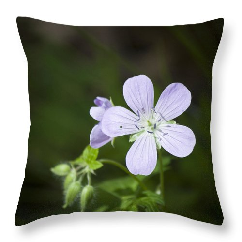 Cranesbill Throw Pillow featuring the photograph Cranesbill by Teresa Mucha