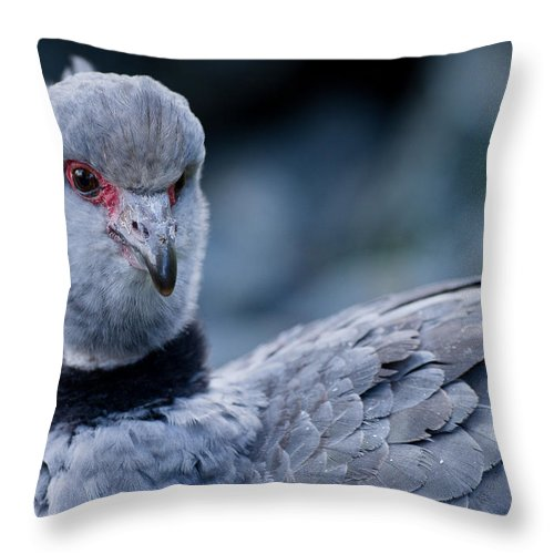 Crested Screamer Throw Pillow featuring the photograph Crested Screamer by Greg Nyquist