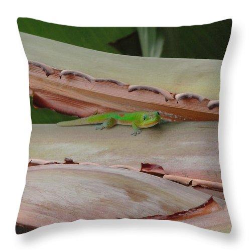 Elaine Haakenson Throw Pillow featuring the photograph Curious Gecko by Elaine Haakenson