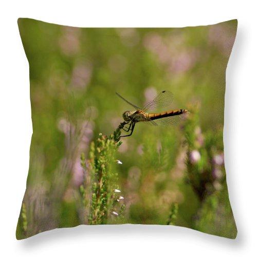 Jouko Lehto Throw Pillow featuring the photograph Darter 1 by Jouko Lehto