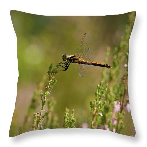 Jouko Lehto Throw Pillow featuring the photograph Darter 2 by Jouko Lehto