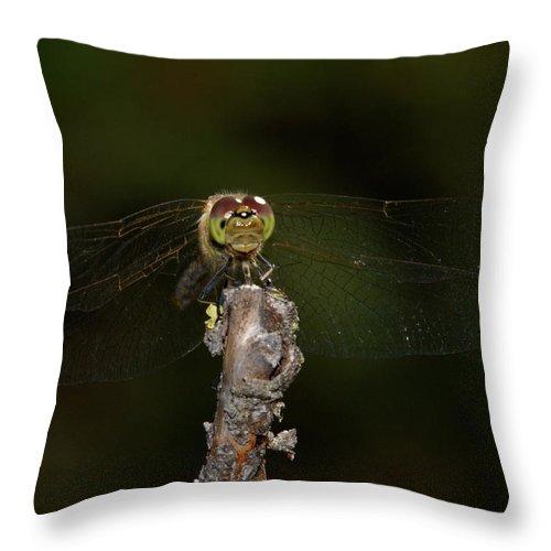Jouko Lehto Throw Pillow featuring the photograph Darter 8 by Jouko Lehto