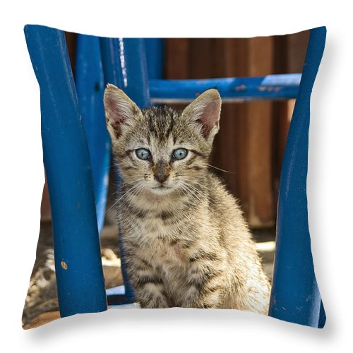 Mp Throw Pillow featuring the photograph Domestic Cat Felis Catus Kitten, Germany by Konrad Wothe