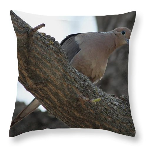 Dove Throw Pillow featuring the photograph Dove by Lori Tordsen