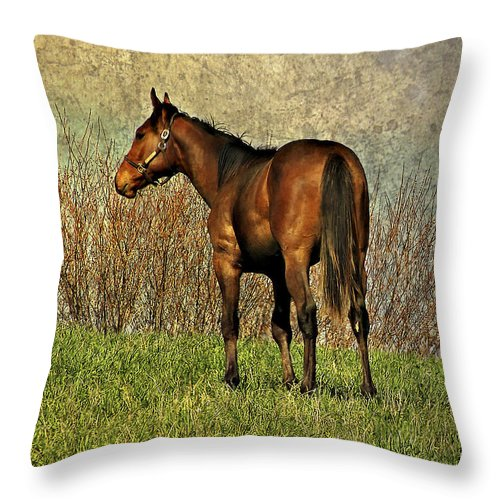 Horse Throw Pillow featuring the photograph Dreamer by Steve Harrington