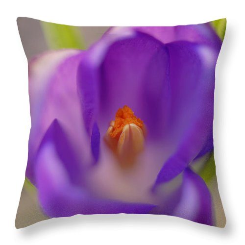Fn Throw Pillow featuring the photograph Dutch Crocus Crocus Vernus Flower by Silvia Reiche