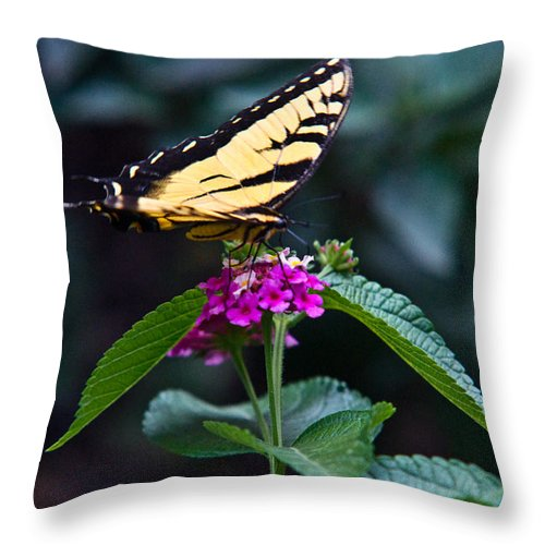 Eastern Throw Pillow featuring the photograph Eastern Tiger Swallowtail 3 by Douglas Barnett