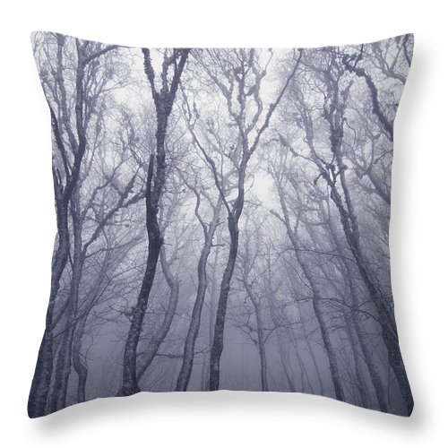 Forest Throw Pillow featuring the photograph Fairy Tale Forest by Zoya S
