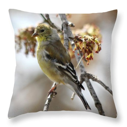 Finch Throw Pillow featuring the photograph Finch by Lori Tordsen