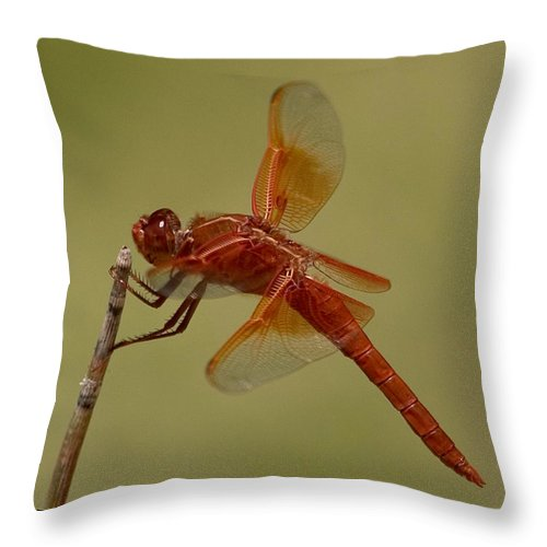 Flame Skimmer Throw Pillow featuring the photograph Flame Skimmer by Stephanie Salter