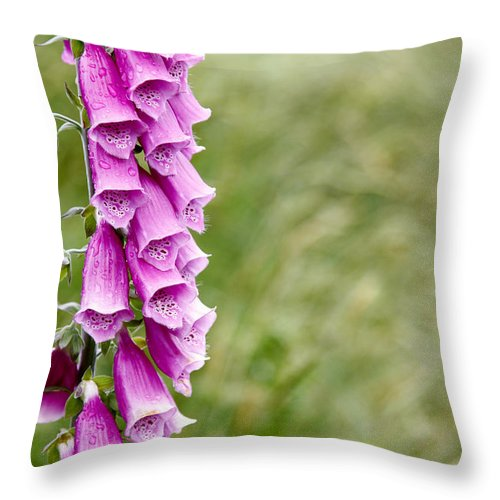 Shallow Focus Throw Pillow featuring the photograph Flowers by Les Cunliffe