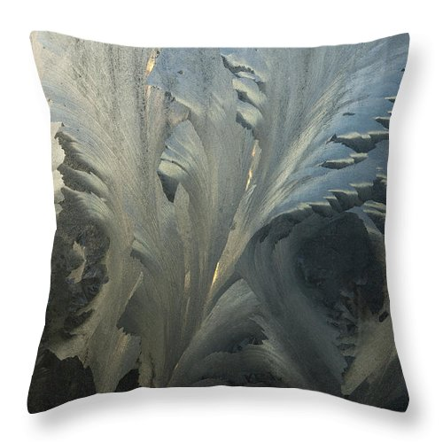 Hhh Throw Pillow featuring the photograph Frost Crystal Patterns On Glass, Ross by Colin Monteath