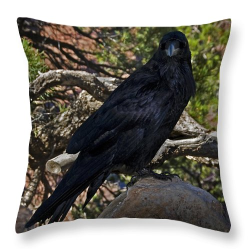Grand Canyon Throw Pillow featuring the photograph Grand Canyon Raven by Murray Bloom