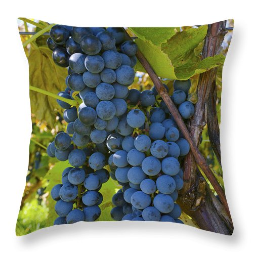Blue Throw Pillow featuring the photograph Grapes On A Vine Sutton Junction Quebec by David Chapman