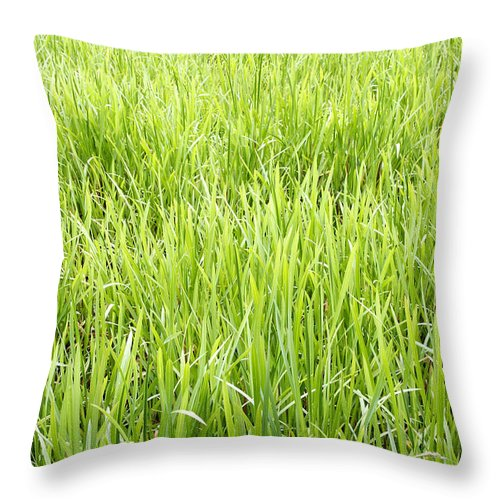 Vertical Throw Pillow featuring the photograph Grasses by Les Cunliffe